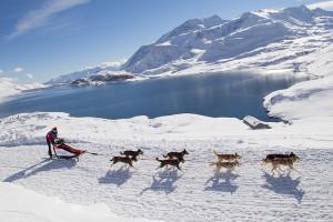 альпы катание за собаками
