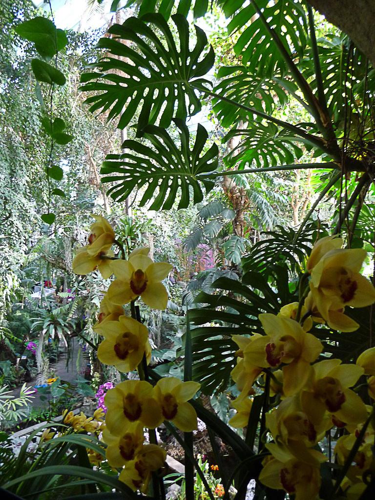 Exposition Mille et une orchidées, grande serre du Jardin des Plantes, Paris 5e (75), 21 février 2013, photo Alain Delavie